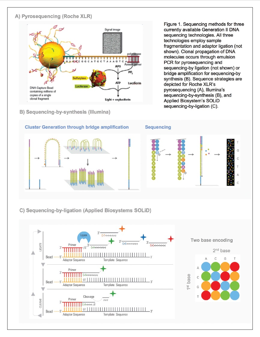 Figure 1 Sequencing methods for three currently available Generation II DNA sequencing technologies