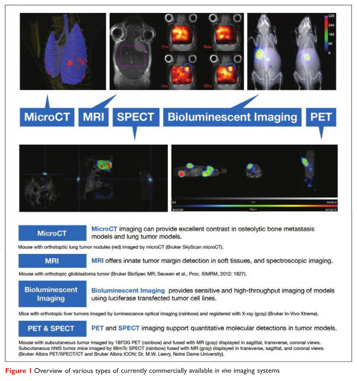 Figure 1 Overview of various types of currently commercially available in vivo imaging systems