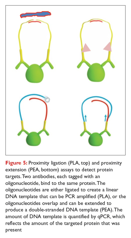 Figure 5 Proximity ligation (PLA) and proximity extension (PEA) assays to detect protein targets