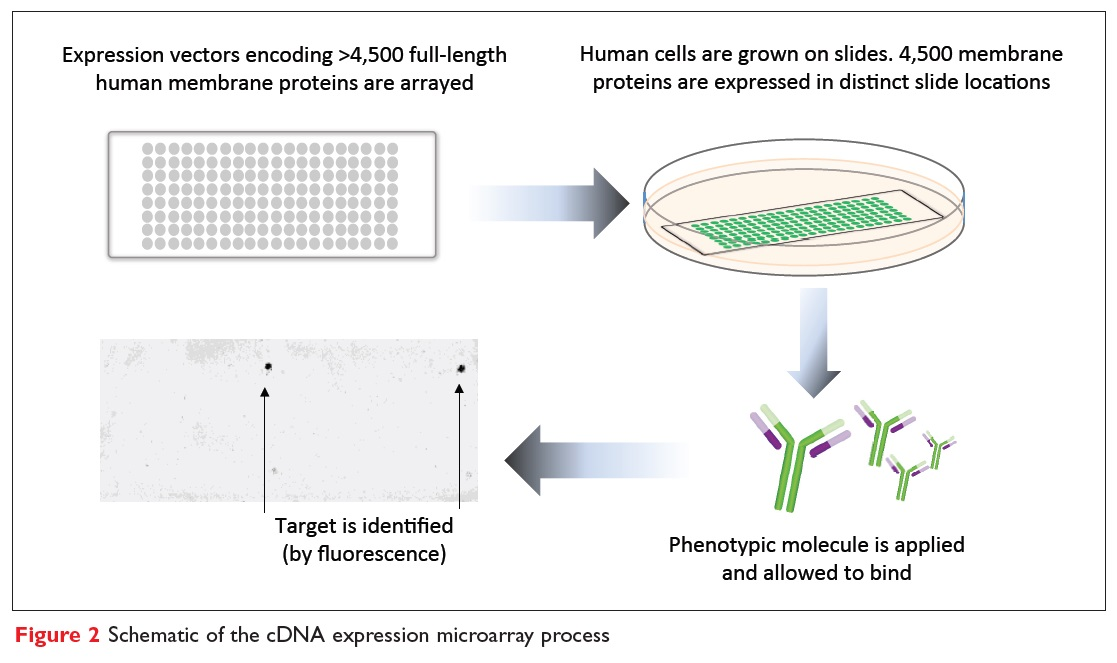Figure 2 Schematic of the cDNA expression microarray process
