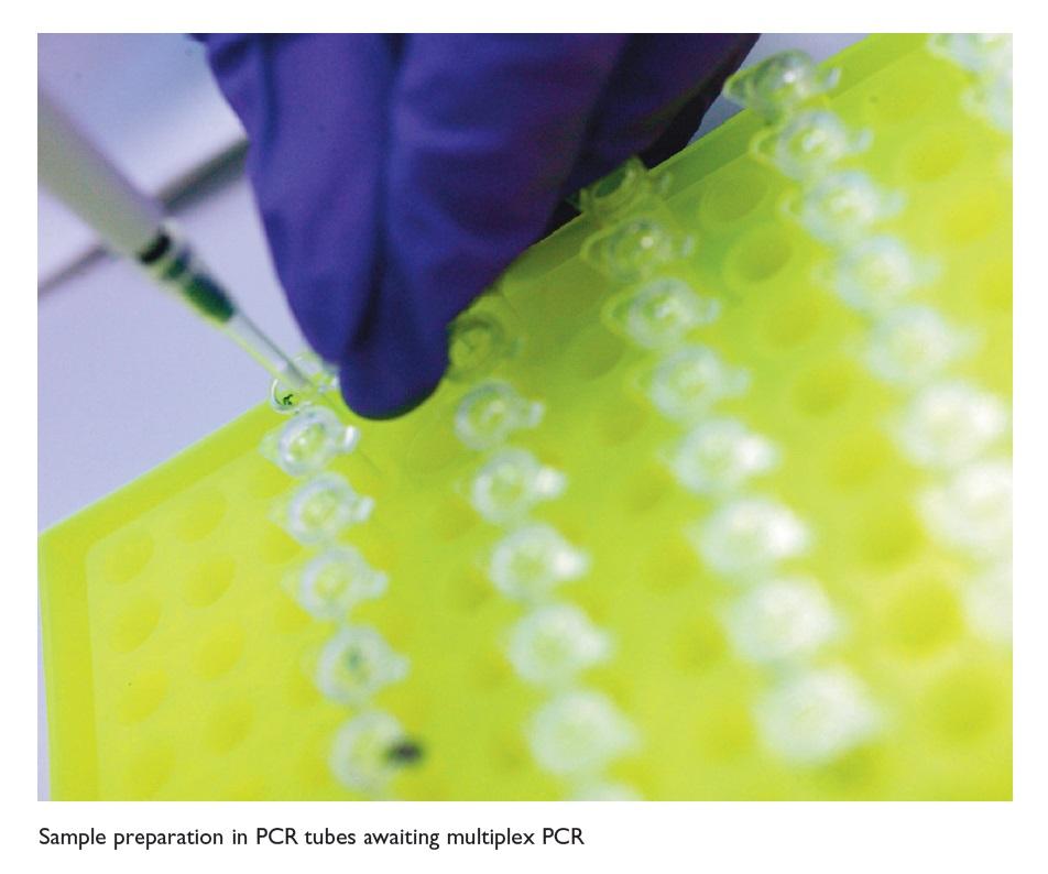 Figure 2 Sample preparation in PCR tubes awaiting multiplex PCR