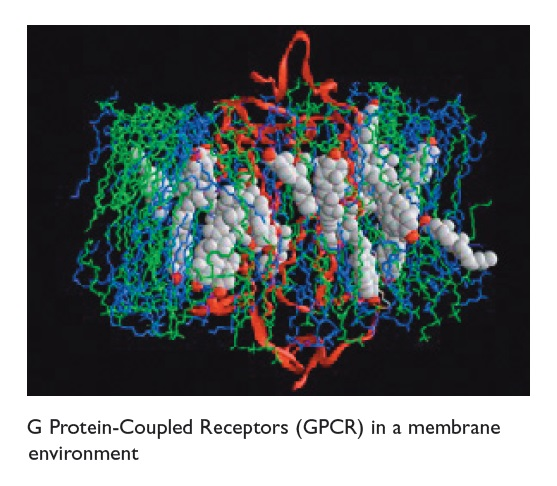 Figure 2 G Protein-Coupled Receptors (GPCR) in a membrane environment