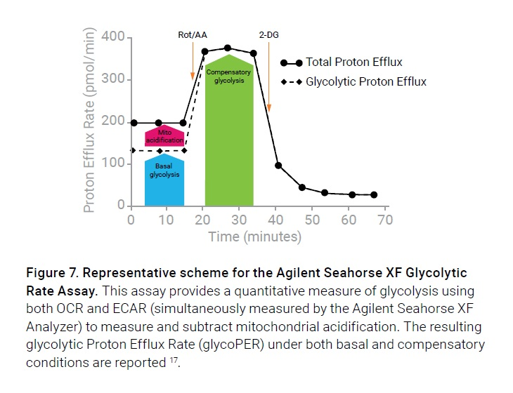 Figure 7 Representative scheme for the Agilent Seahorse XF Glycolytic Rate Assay
