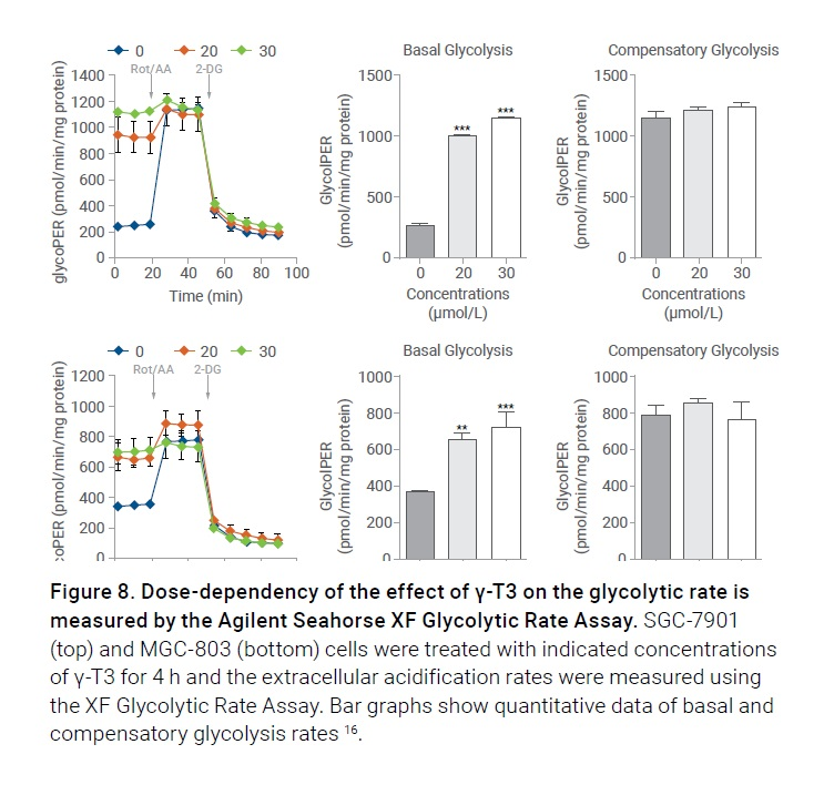 Figure 8 Dose-dependency of the effect of y-T3 on glycolytic rate