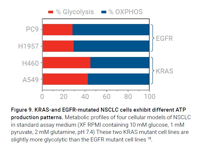 Figure 9 KRAS- and EGFR- mutated NSCLC cells exhibit different ATP production