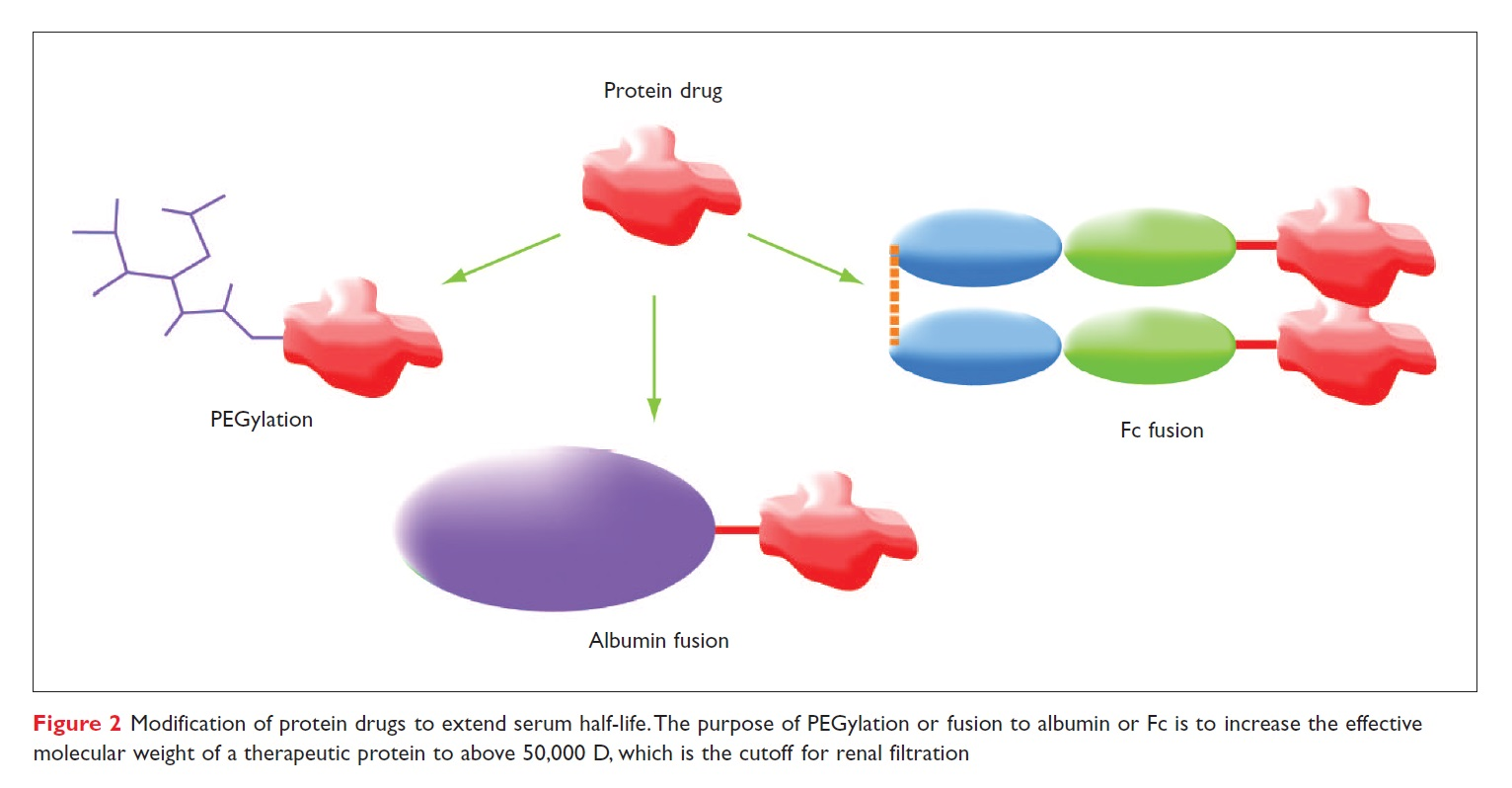 Figure 2 Modification of protein drugs to extend serum half-life