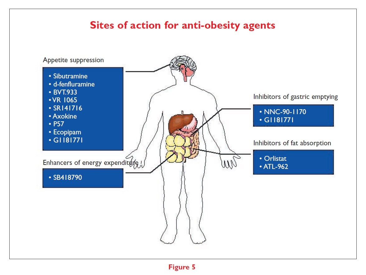 Figure 5 Sites of action for anti-obesity agents