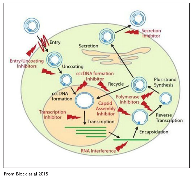 Image 2 Hepatitis B Therapy Illustration