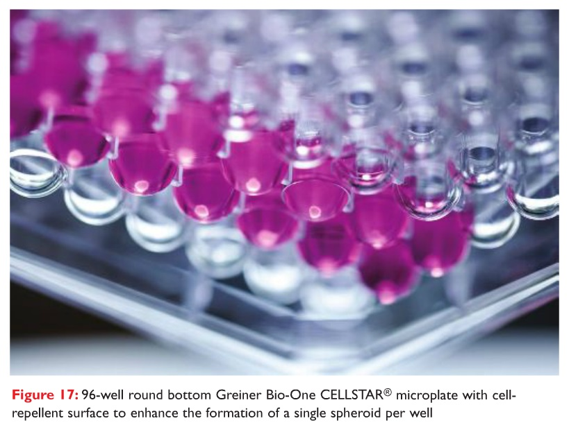 Figure 17 96-well round bottom Greiner Bio-One CELLSTAR microplate with cell-repellent surface to enhance the formation of a single spheroid per well