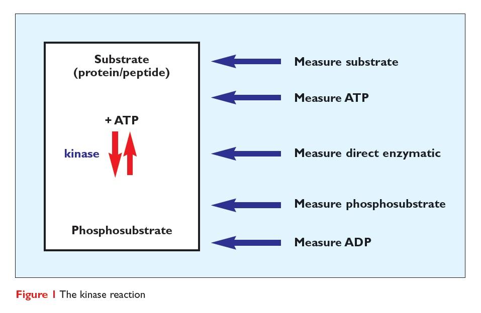 Figure 1 The kinase reaction