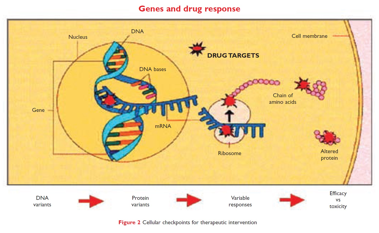 Figure 2 Genes and drug response