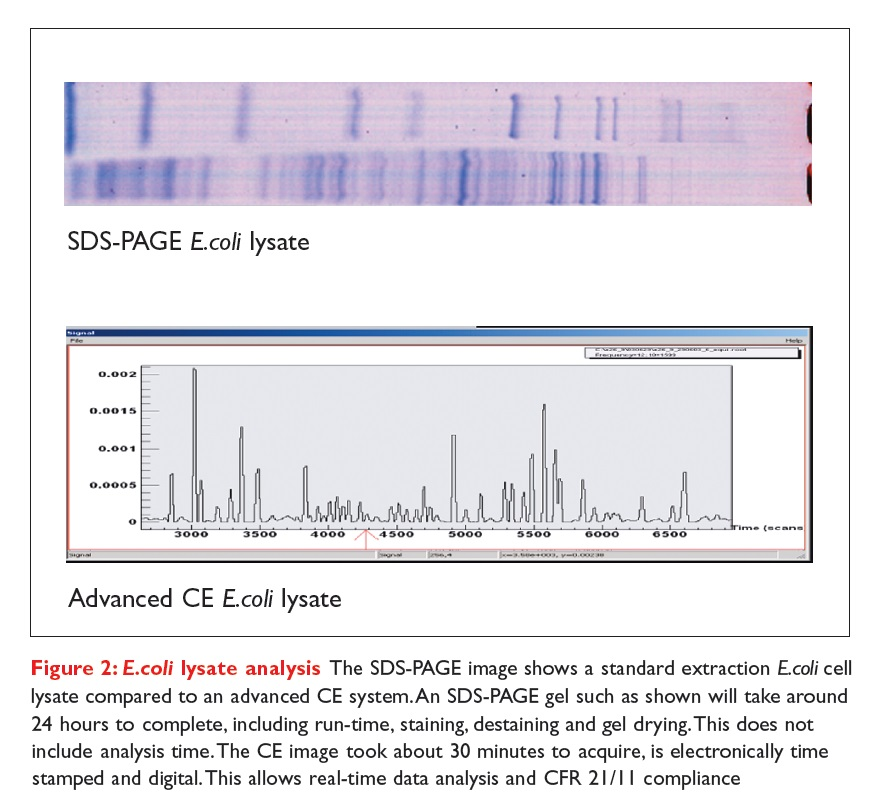 Figure 2 E.coli lysate analysis - The SDS-PAGE image shows a standard extraction E.coli cell lysate compared to an advanced CE system