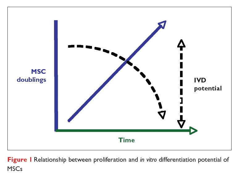 Figure 1 Relationship between proliferation and in vitro differentiation potential of MSCs