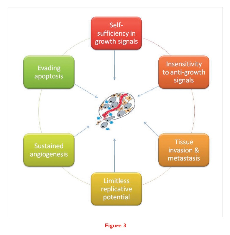 Figure 3 6 key factors identified as the hallmarks of malignant growth in the majority of solid tumours and the key drivers behind cancer development
