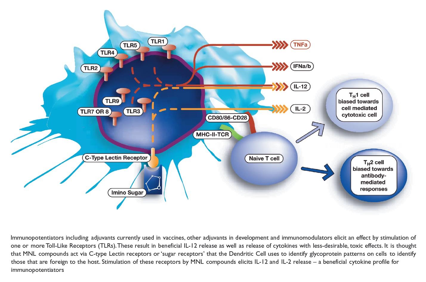 Figure 2 Immunopotentiators including adjuvants currently used in vaccines