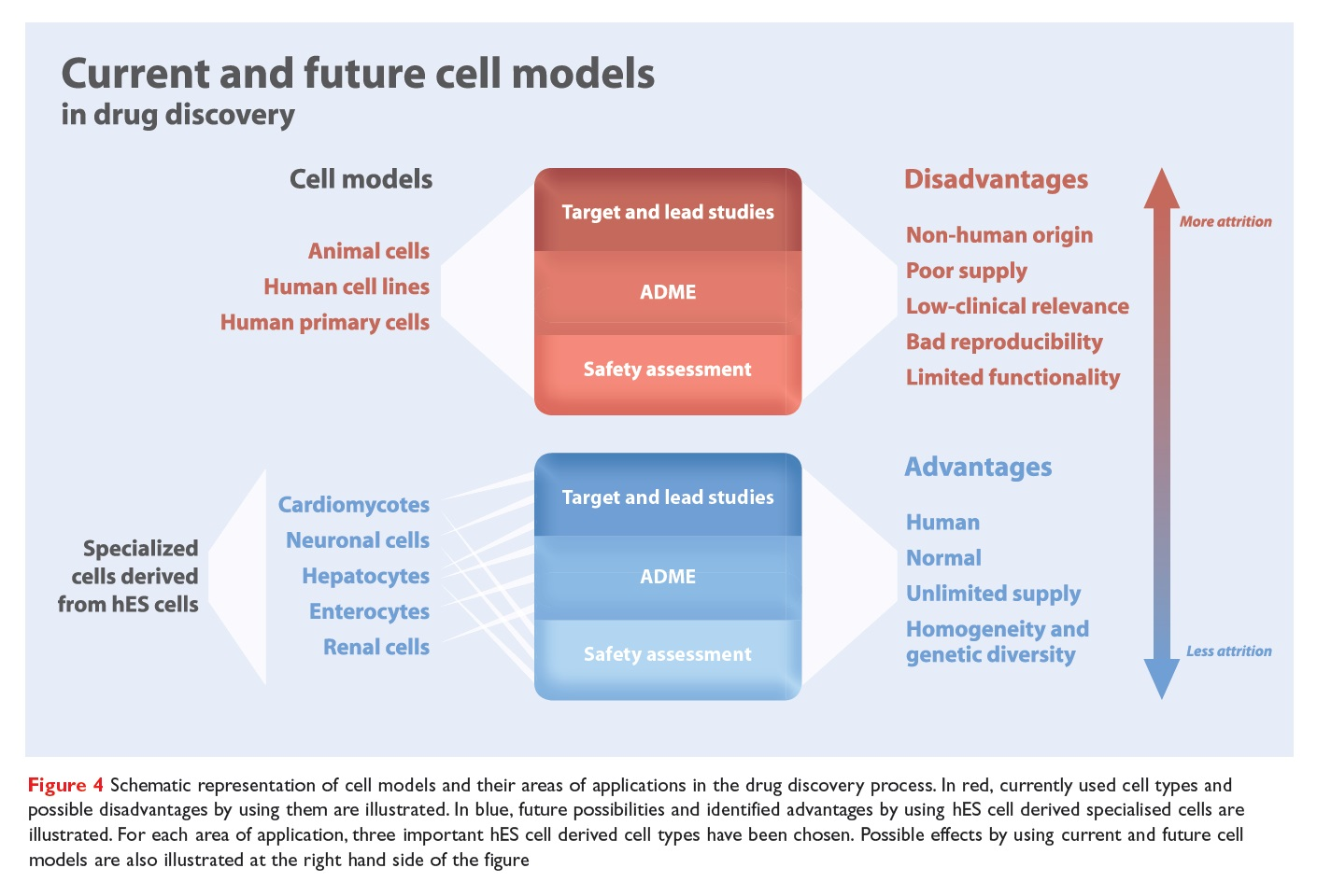 Figure 4 Schematic representation of cell models and their areas of applications in the drug discovery process