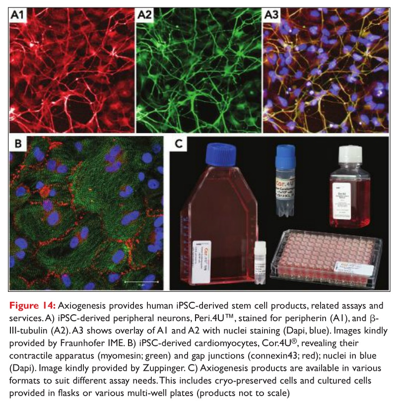 Figure 14 Axiogenesis provides human iPSC-derived stem cell products, related assays and services