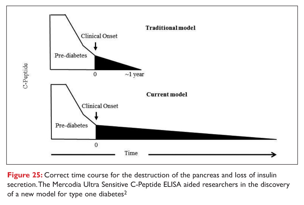 Figure 25 Correct time course for the destruction of the pancreas and loss of insulin secretion