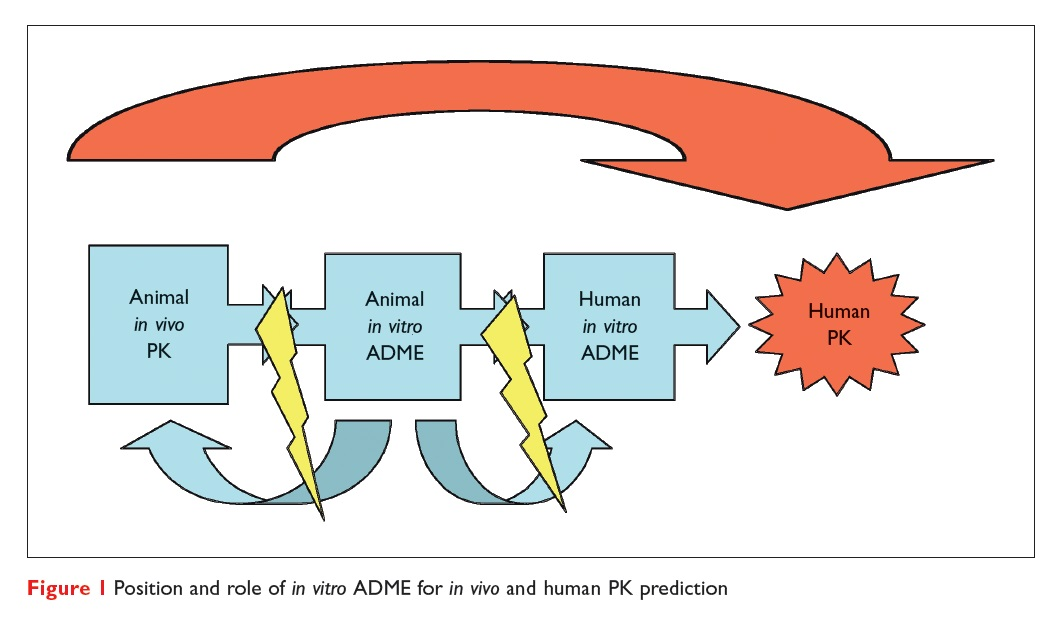 Figure 1 Position and role of in vitro ADME for in vivo and human PK prediction