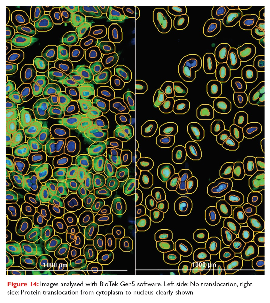 Figure 14 Images analysed with BioTek Gen5 software