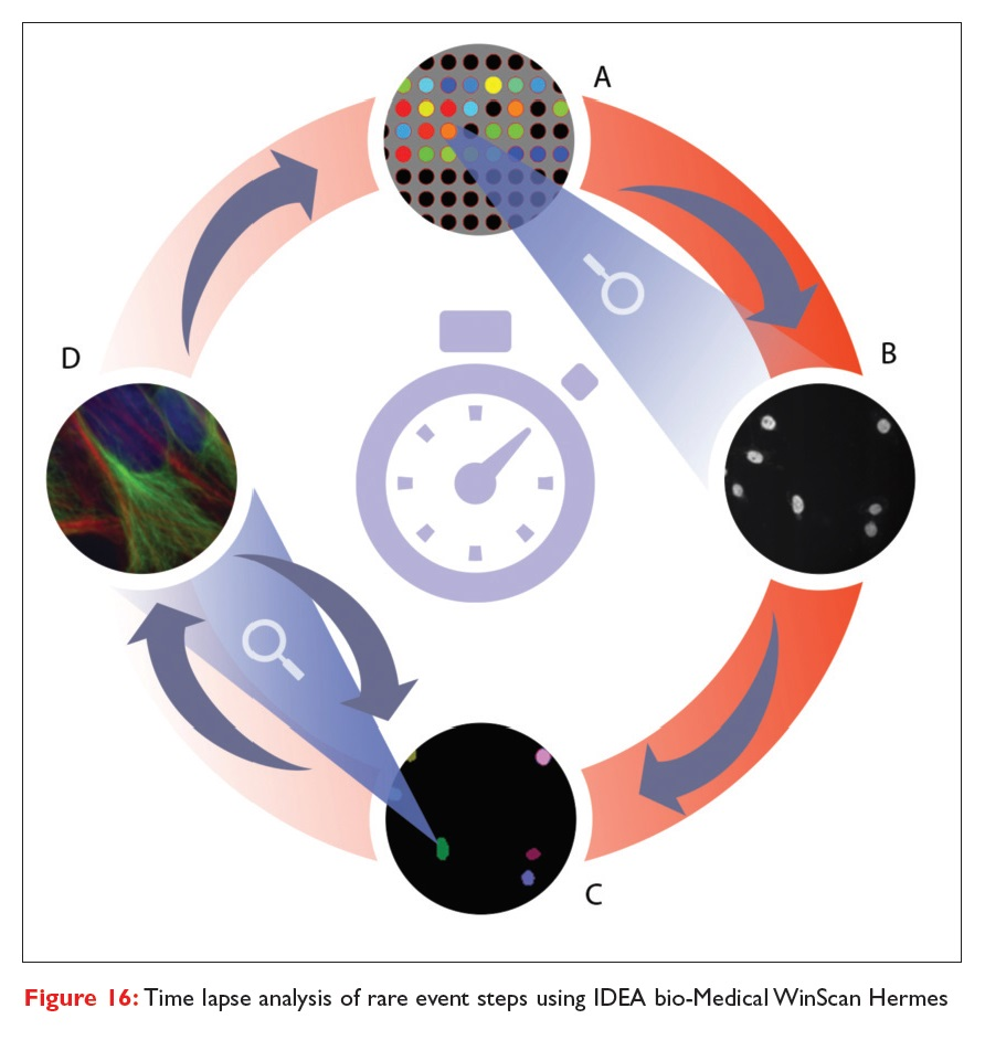 Figure 16 Time lapse analysis of rare event steps using IDEA bio-Medical WinScan Hermes