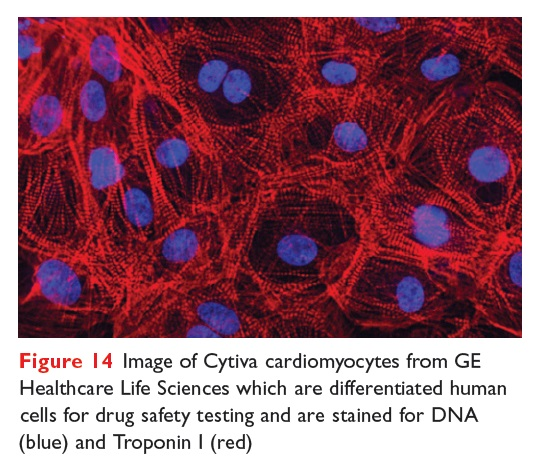 Figure 14 Image of Cytiva cardiomyocytes from GE Healthcare Life Sciences