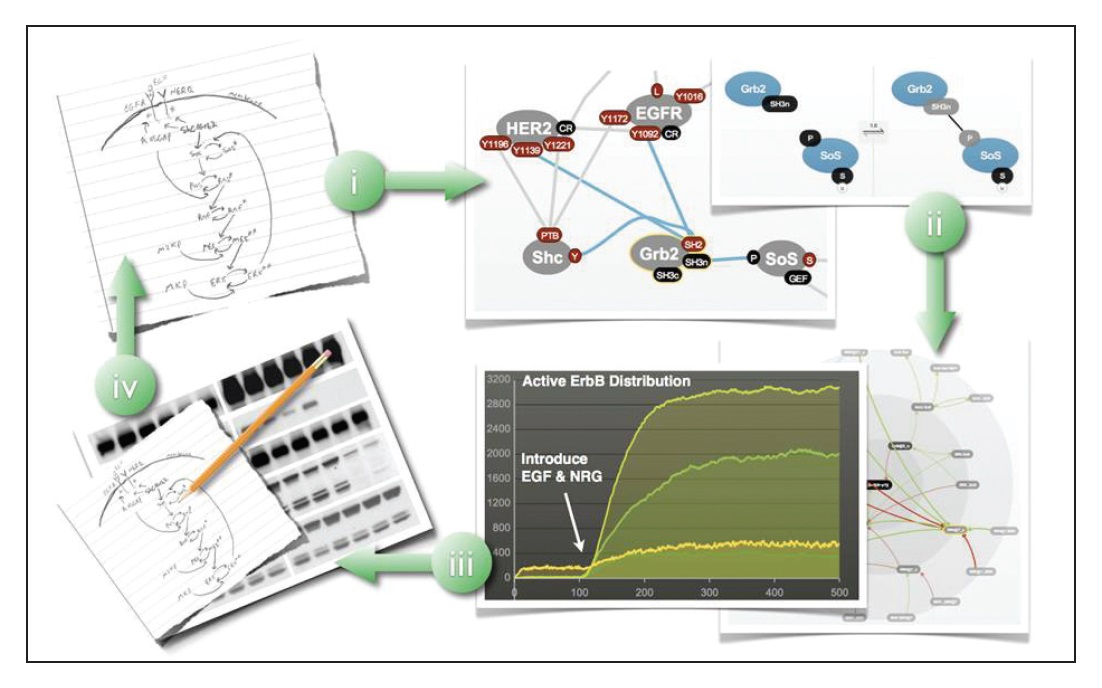 Image 1 Informatics, biologists models, diagrams and workings