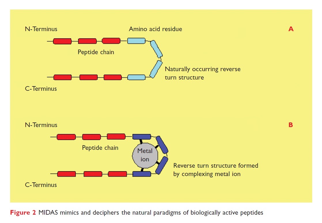 Figure 2 MIDAS mimics and deciphers the natural paradigms of biologically active peptides