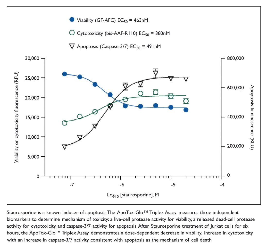 Figure 3 Staurosporine is a known inducer of apoptosis, the ApoTox-Glo Triplex Assay