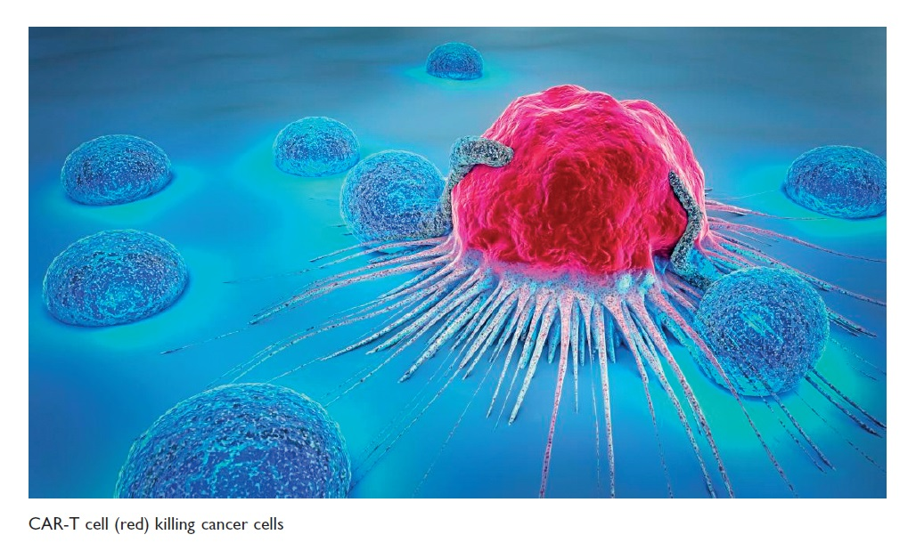 Figure 2 CAR-T cell (red) killing cancer cells