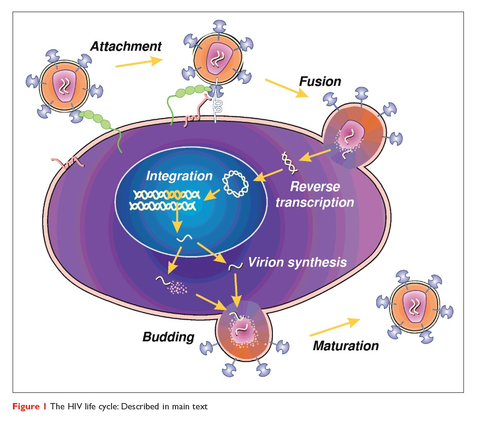 Figure 1 The HIV life cycle, described in main text