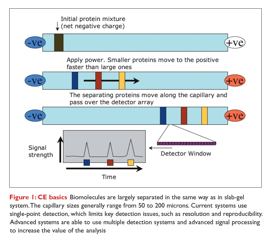 Figure 1 CE basics - Biomolecules are largely seperated in the same way as in slab-gel system. The capillary sizes generally range from 50 to 200 microns