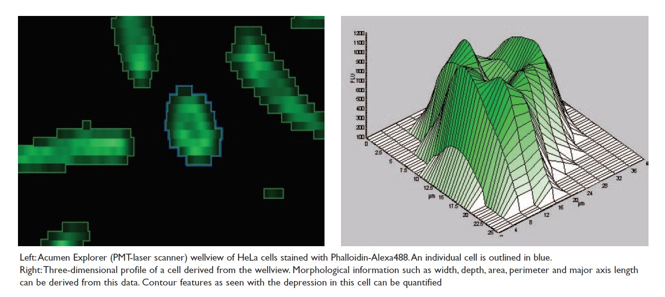 Image 3 Acumen explorer (PMT-laser scanner) wellview of HeLa cells, and 3D profile of a cell derived from the wellview