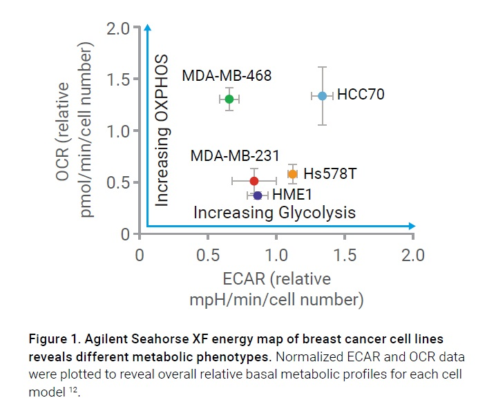 Figure 1 Agilent Seahorse XF energy map of breast cancer cell lines