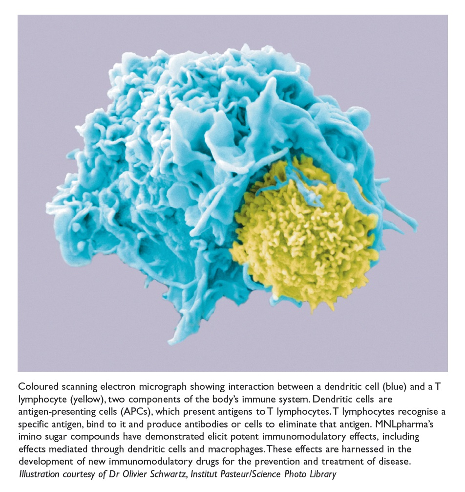 Figure 1 Coloured scanning electron micrograph showing interaction between a dendritic cell and a T lymphocyte, components of the body's immune system
