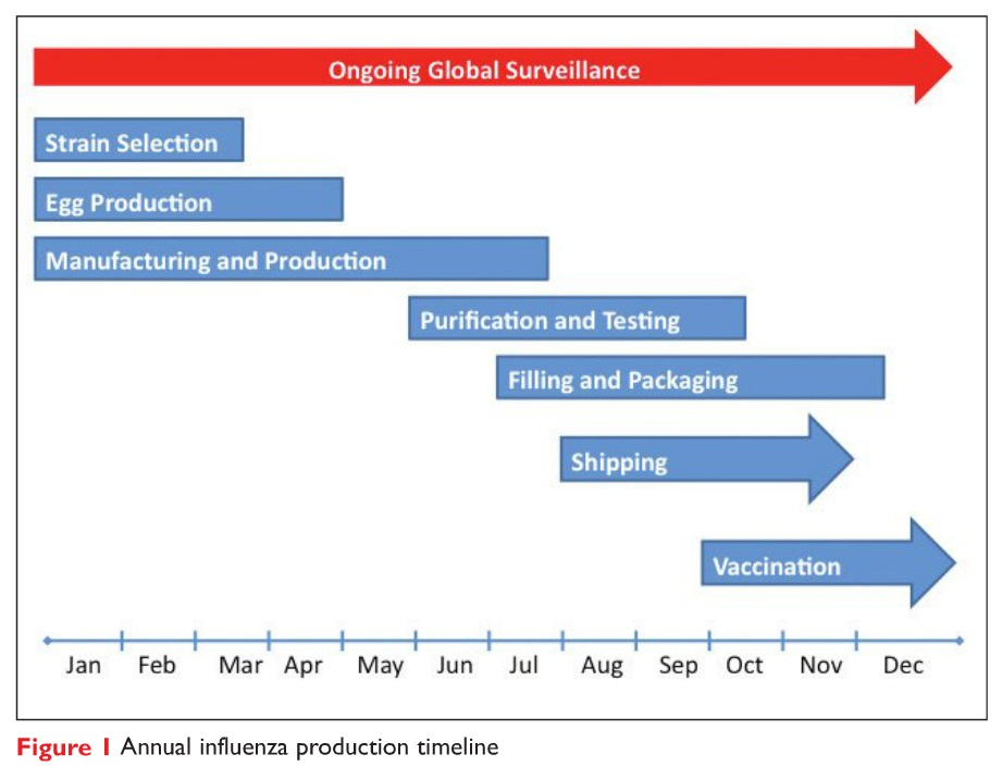 Figure 1 Annual influenza production timeline