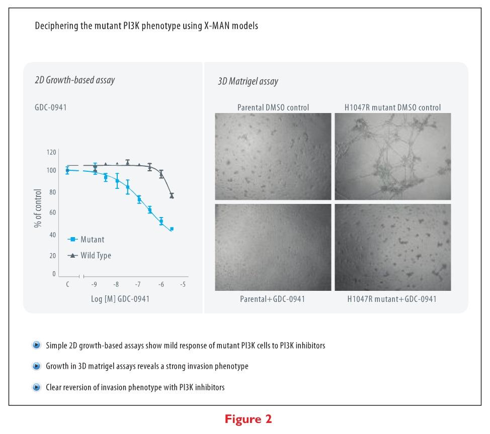 Figure 2 Deciphering the mutant P13K phenotype using X-MAN models