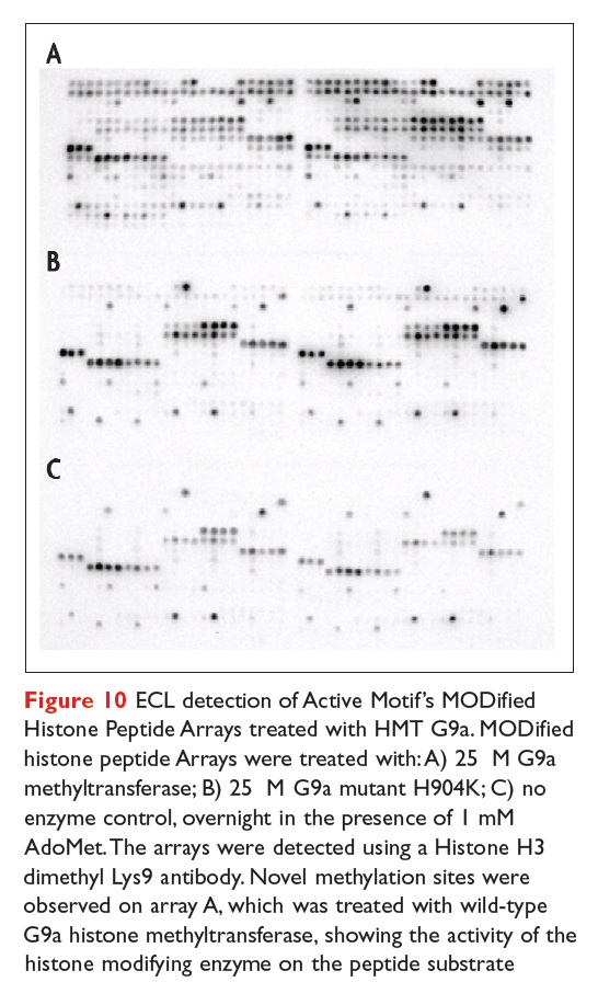 Figure 10 ECL detection of Active Motif's MODified Histone Peptide Arrays treated with HMT G9a