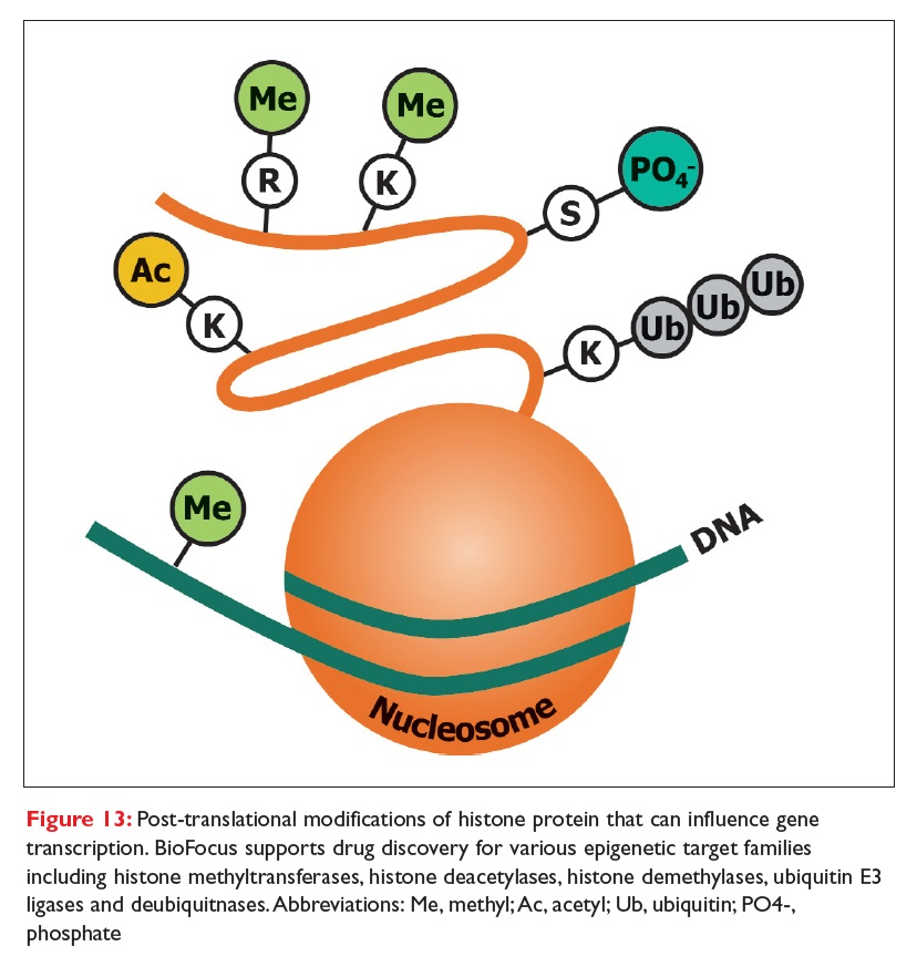 Figure 13 Post-translational modifications of histone protein that can influence gene transcription
