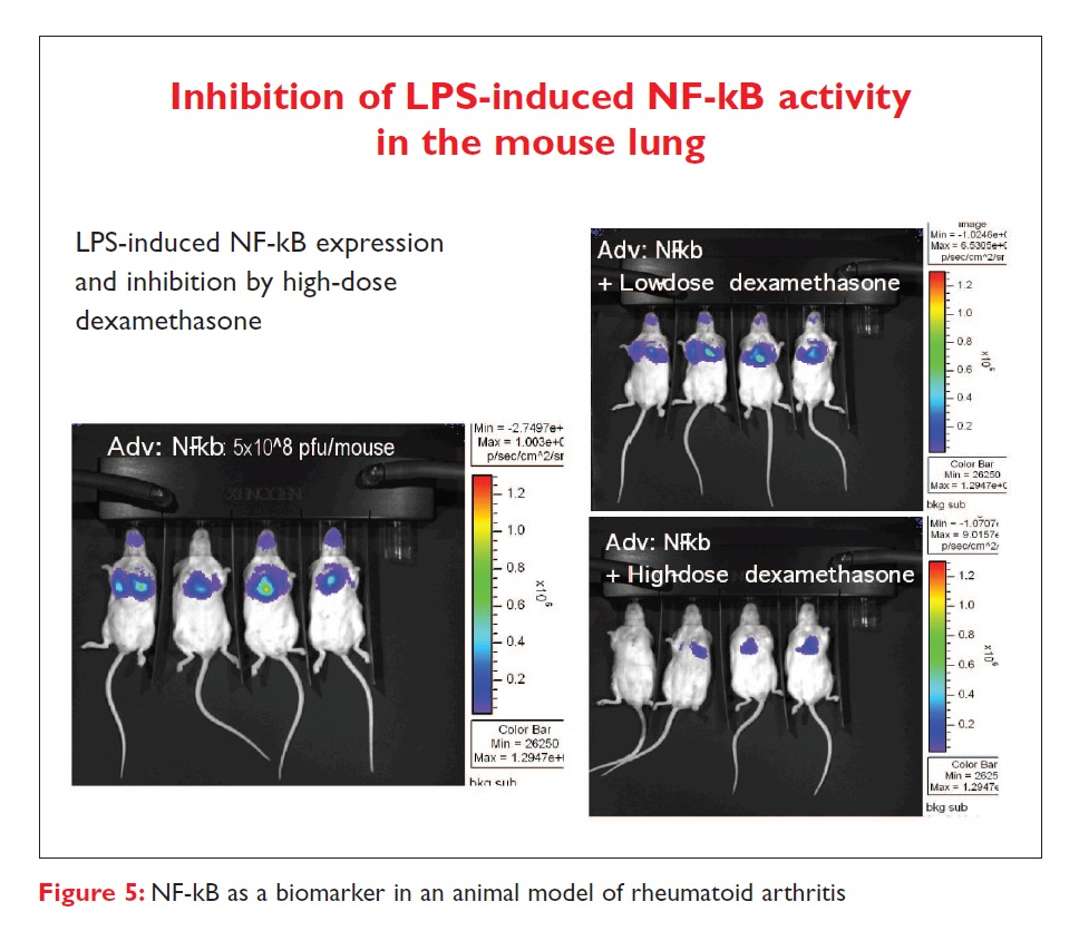 Figure 5 Inhibition of LPS-induced NF-kB activity in the mouse lung
