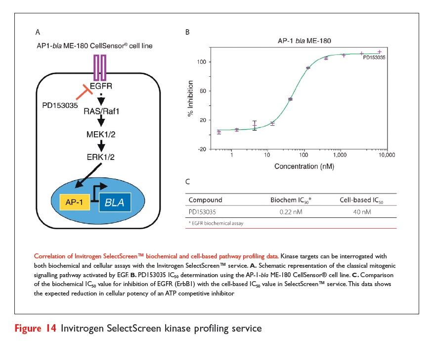 Figure 14 Invitrogen SelectScreen kinase profiling service