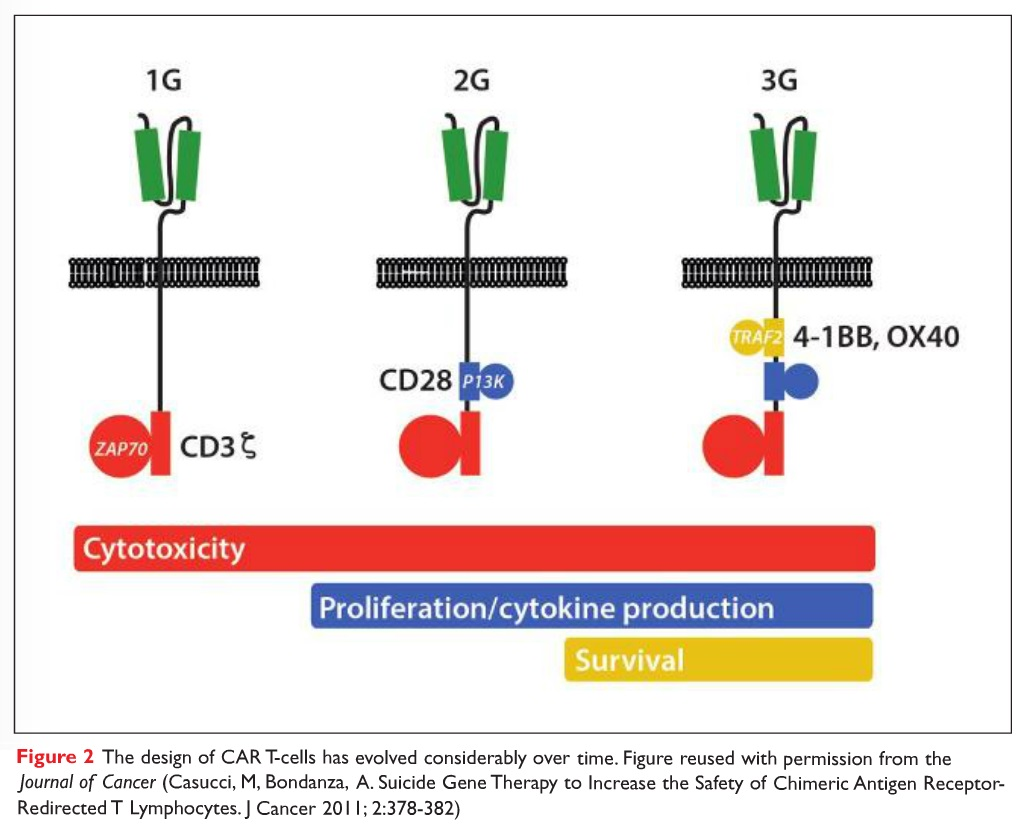 Figure 2 The design of CAR T-cells has evolved considerably over time