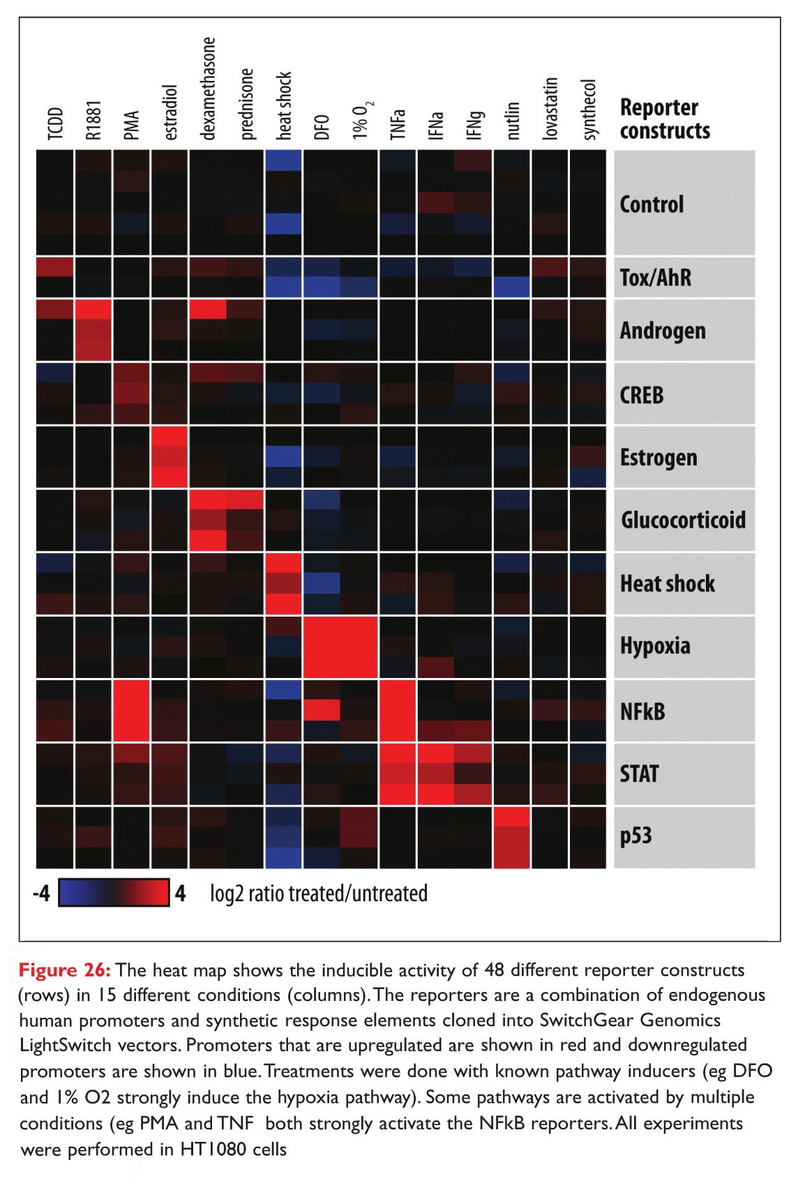 Figure 26 The heat map shows the inducible activity of 48 different reporter constructs in 15 different conditions