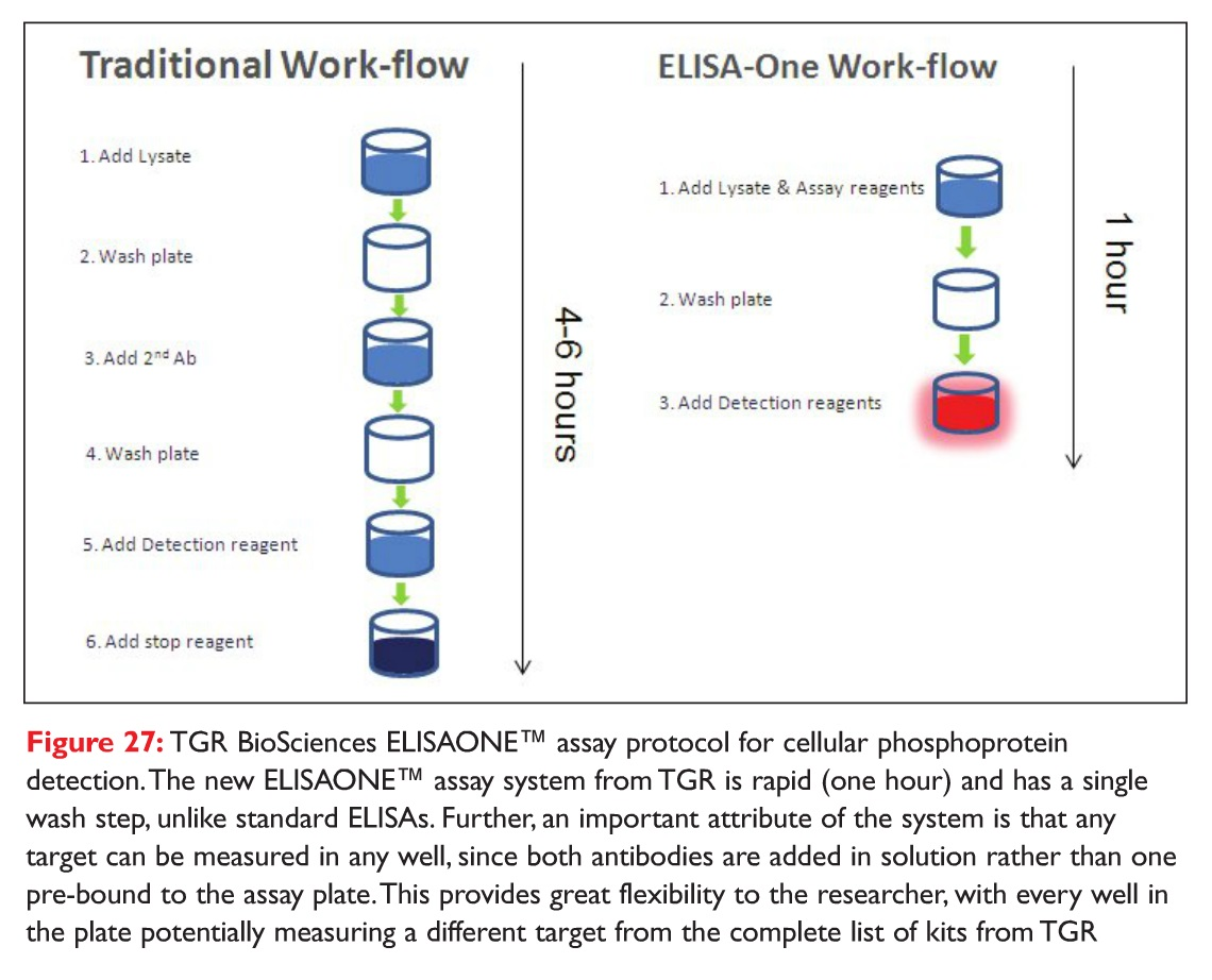 Figure 27 TGR BioSciences ELISAONE assay protocol for cellular phosphoprotein detection