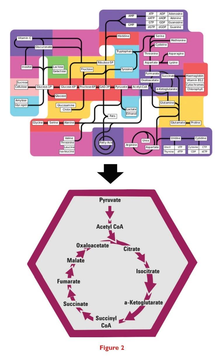 Figure 2 Metabolomics diagram