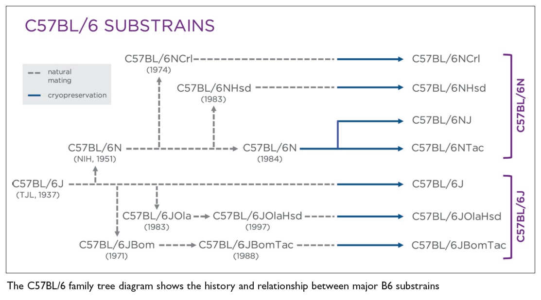 Image 2 The C57BL/6 family tree diagram shows the history and relationship between major B6 substrains