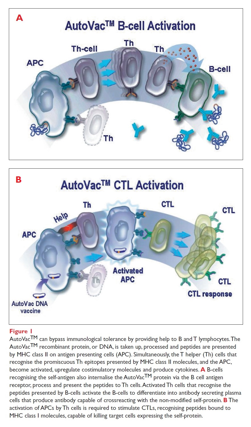 Figure 1 AutoVac can bypass immunological tolerance by providing help to B and T lymphocytes