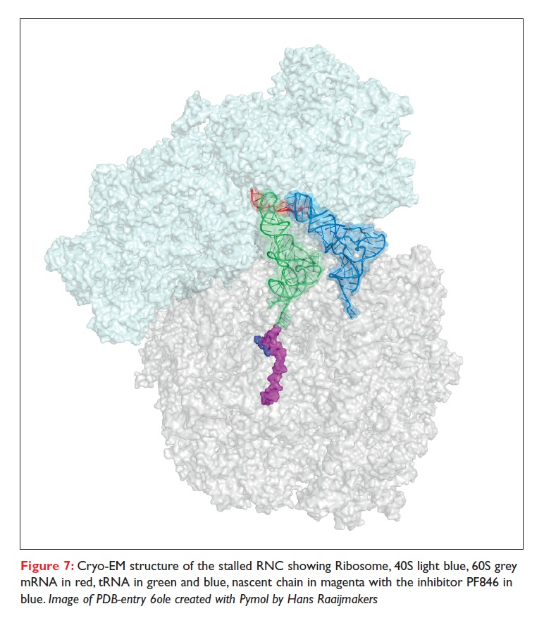 Figure 7 Cryo-EM structure of the stalled RNC showing Ribosome