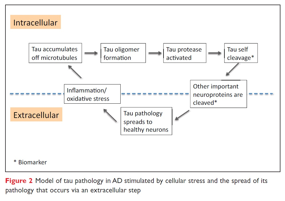 Figure 2 Model of tau pathology in AD stimulated by cellular stress and the spread of its pathology that occurs via an extracellular step