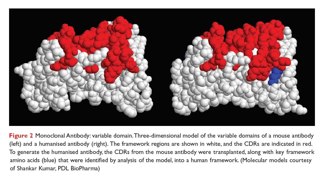 Figure 2 Monoclonal Antibody: variable domain. 3D model of the variable domains of a mouse antibody and a humanised antibody